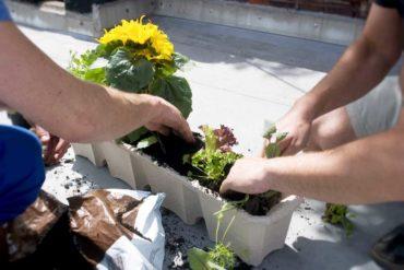 Ottimizza-lo-spazio-del-balcone-ricavando-un-piccolo-orto-i-vasi
