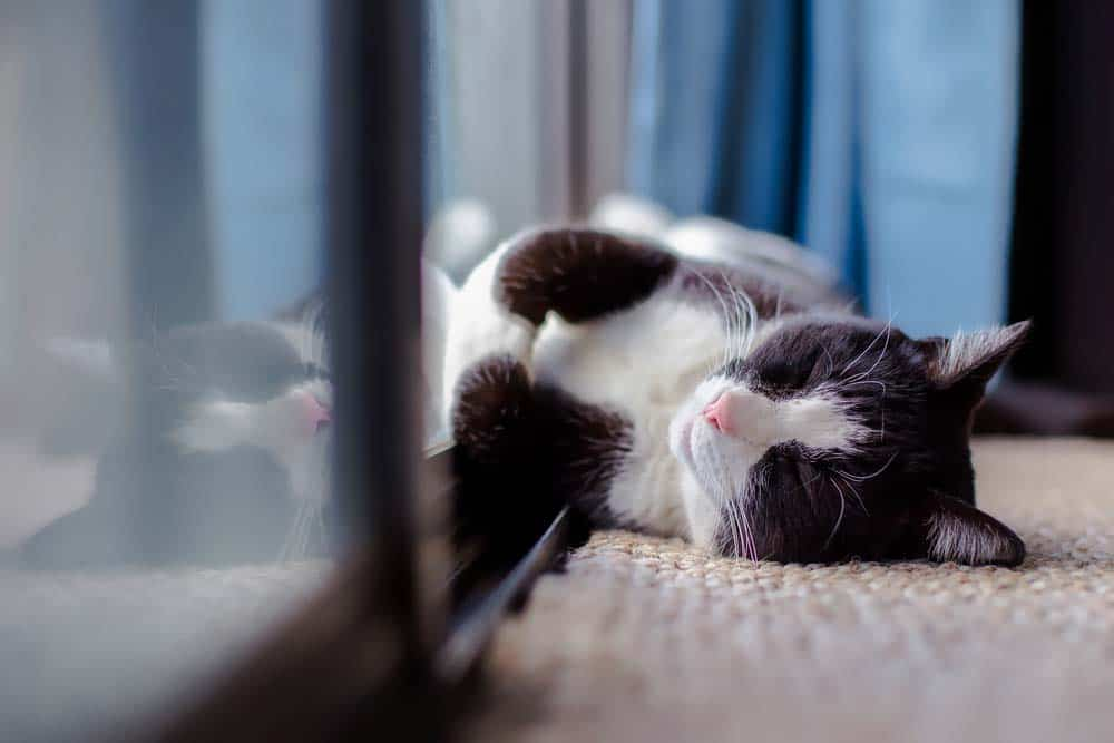 Vivere-con-animali-in-casa-3
