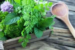 Plant-Terrasse-Holz
