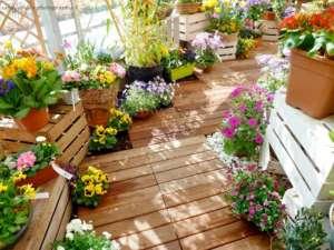 Terrasse-Blumen-Natur