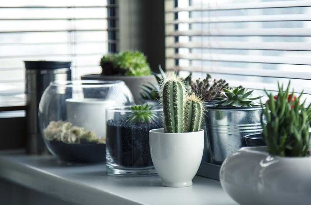 come-creare-un-giardino-in-casa-2