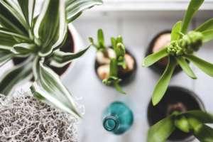 Come-mantenere-la-casa-fresca-in-estate-3