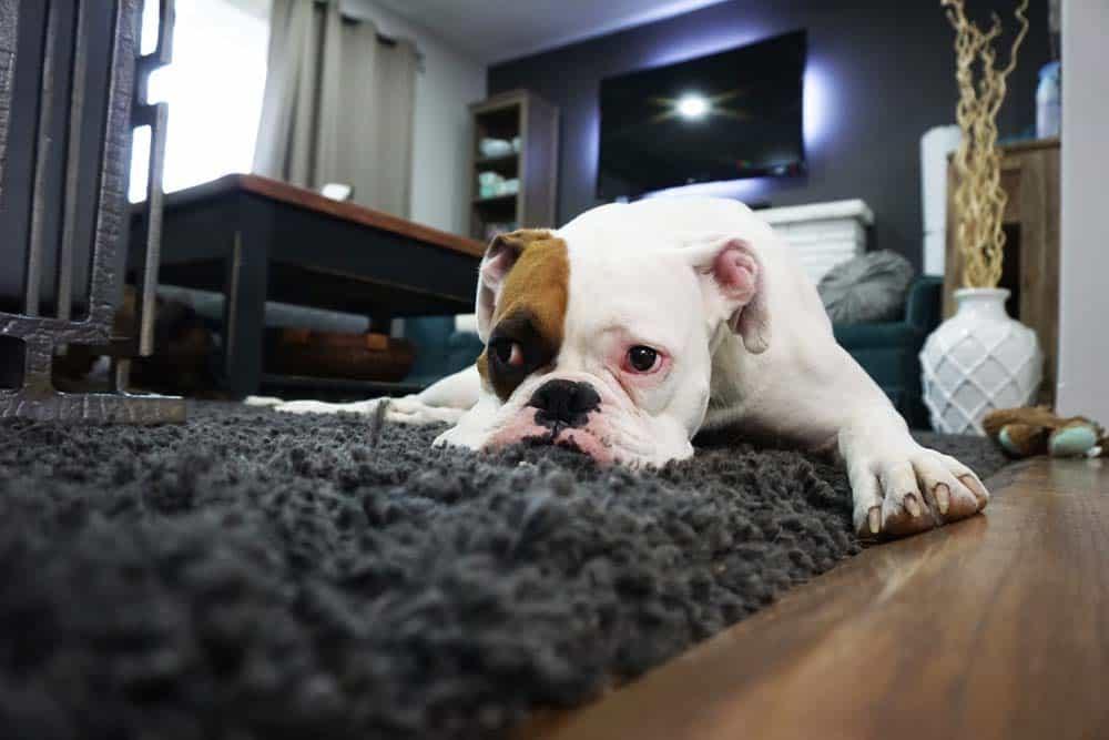 Vivere-con-animali-in-casa-2