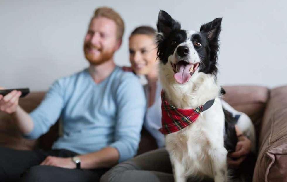 Vivir-con-animales-en-casa